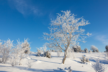 Hoarfrost covered tree in vinter landscape 版權商用圖片