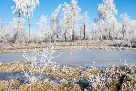 Frozen moor lake in winter
