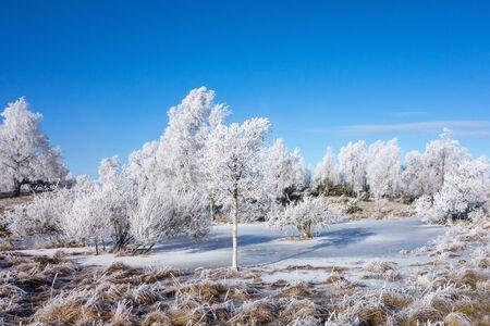 Frozen moor landscape in winter photo