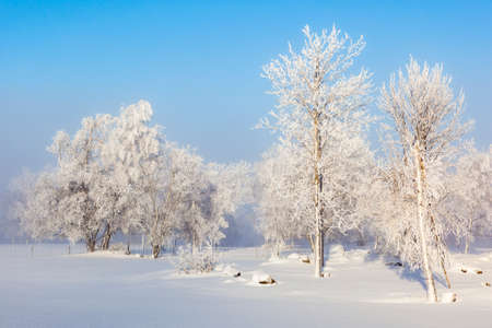 wintery day: Trees Grove in wintry landscape