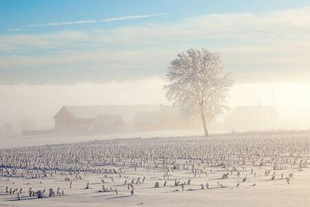 Farm in a misty wintry landscape photo