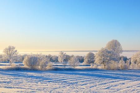 snowy field: Winter landscape with snow on field