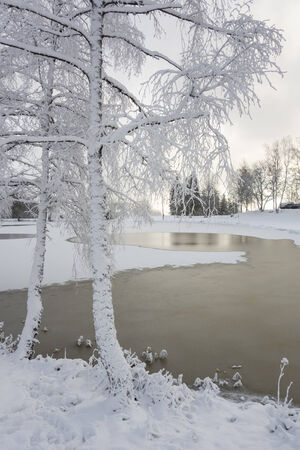 frozen lake: Hoarfrost covered trees on a frozen lake