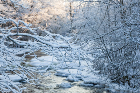 Snowy branches at winter in river landscape photo
