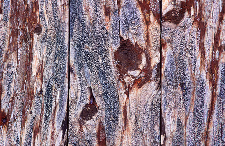 veiny: Liquen en una pared de madera vieja Foto de archivo