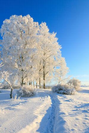 Garden path in winter landscape Imagens