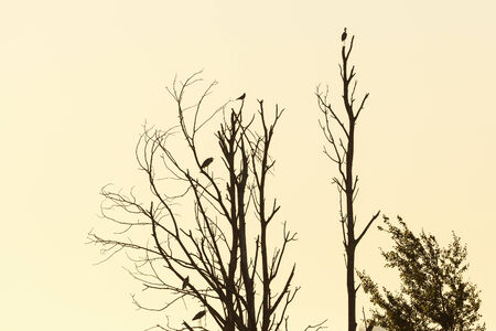 Grey herons sitting in the tree photo