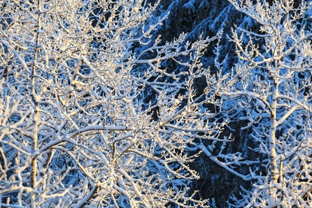 Tree branches with hoarfrost in the woods Imagens