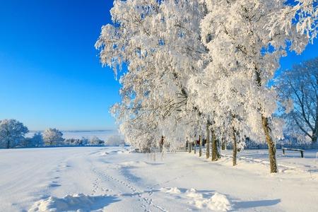 animal tracks: Paesaggio invernale con tracce di animali nella neve