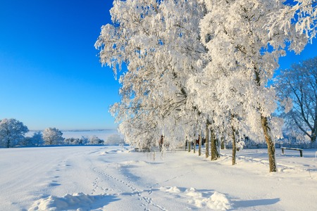 huellas de animales: Paisaje de invierno con huellas de animales en la nieve