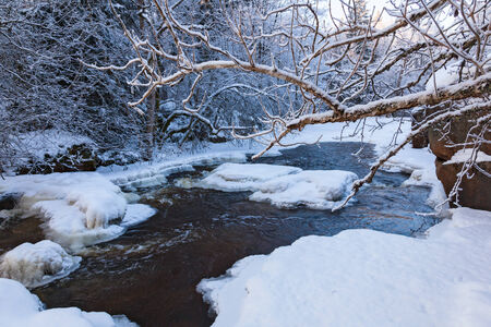 frozen river: Tree branch at a frozen river Stock Photo