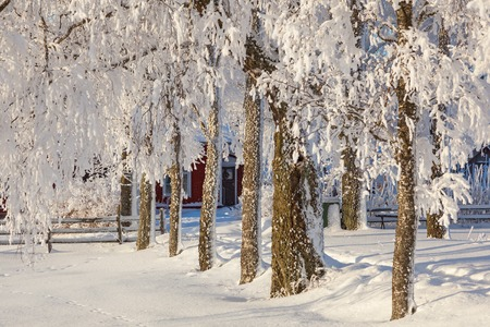 Snow covered trees in winter garden Stock Photo