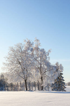 wintry: Hoarfrost covered trees in wintry landscape Stock Photo