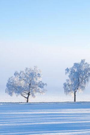 treeline: Winter tree by the road in the field