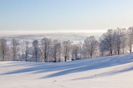 Wintry trees in the landscape with backlight photo