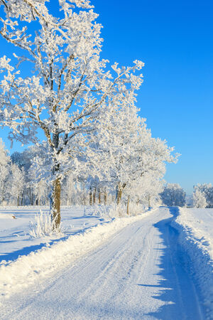 hoarfrost: Winter road with trees in hoarfrost landscape