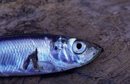 capture: Fish capture from the sea.
