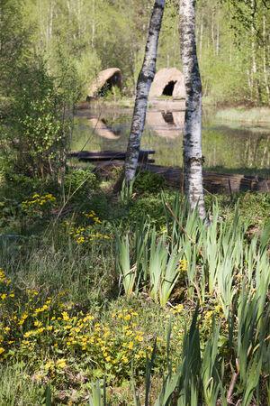 tree marigold: Old Stone age hut at the lake, reconstruction.
