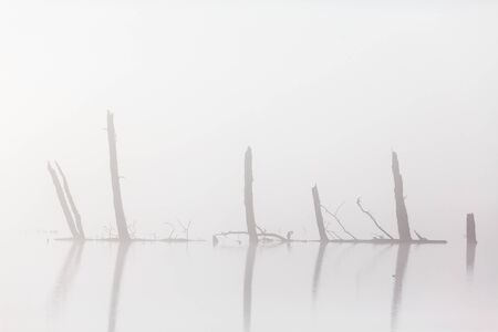 Tree trunks in the water in fog photo