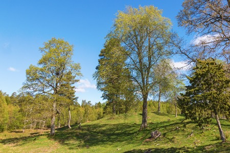 newly: Pasture with newly blossomed trees in springtime Stock Photo