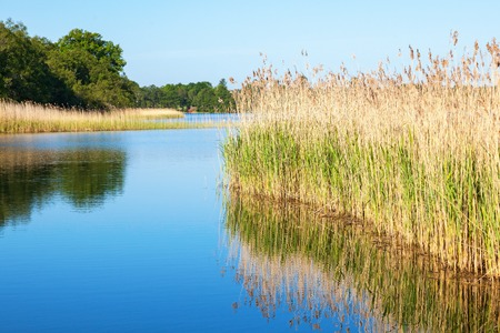quietude: River with reeds in summer landscape