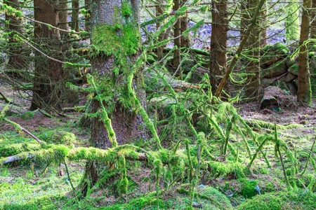 fallen tree: Fallen tree covered with green moss in the forest Stock Photo