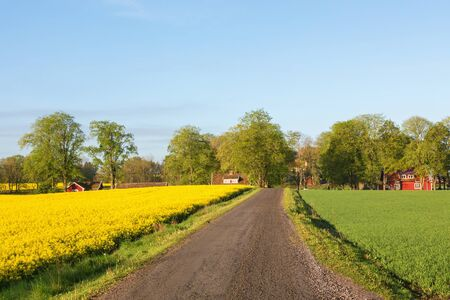 rural landscapes: Dirt road through rural landscapes