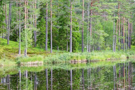 reflecting: Woods lake with pine trees reflecting in the water