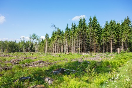 treetrunk: Deforestation at the forest edge Stock Photo