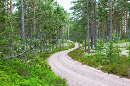 Curvy gravel road through the woods