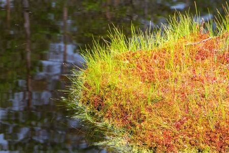 water's edge: Blades of grass and moss that grows on the waters edge