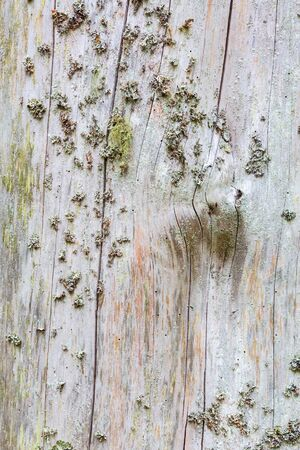treetrunk: Old textured tree trunk with moss and lichen Stock Photo