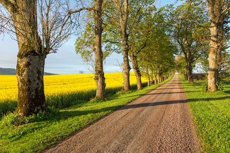 rural landscapes: Gravel road alley through rural landscapes