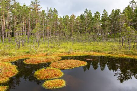 bogs: Forest lake with moss islands in the water