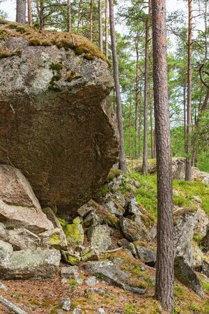 treetrunk: Big rocks in the ancient forest