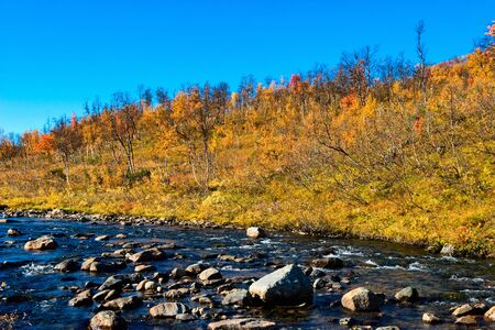 colour in: River and autumn color in the birch forest