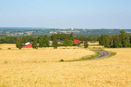 rural landscapes: View of rural landscapes with corn field