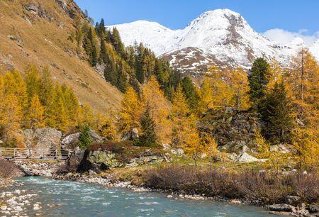 osttirol: Autumn forest in the alp valley
