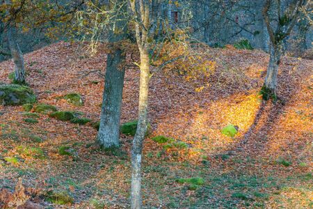 sunspot: Sunspot in forest at autumn