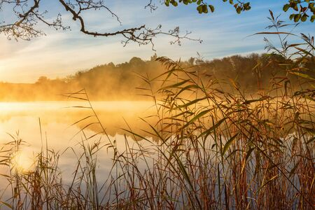 waters edge: Reeds at the waters edge and autumn fog on the lake at sunrise