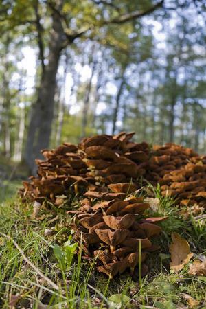 tree stump: Mushrooms on a old tree stump Stock Photo