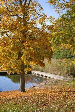 footbridges: Autumn tree at the lake Stock Photo