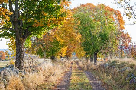footpath: Country road with trees in autumn colors Stock Photo