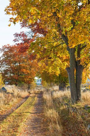 treetrunk: Country road with treeline in autumn colors
