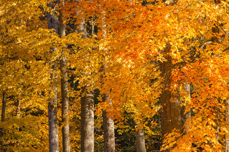 treetrunk: Forest in with leaves in autumn colors