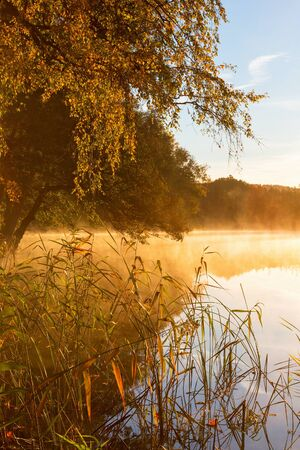 water's edge: Reeds at the waters edge and fog on the lake at sunrise in autumn colors Stock Photo