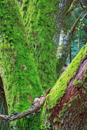 treetrunk: Tree cover with green moss Stock Photo