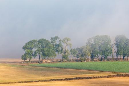 treeline: Misty rural landscape view with a treeline