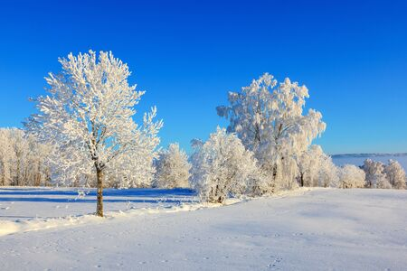 흰 서리: Trees in hoarfrost in the meadow 스톡 사진