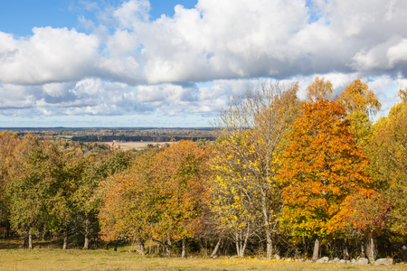 aerial view: View of the deciduous forest in autumn colors